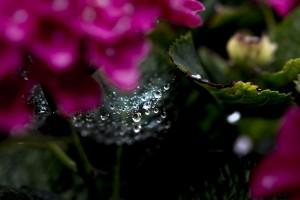 美しい梅雨空と雨の撮影方法&写真集!オススメのカメラやレンズ・機材も!