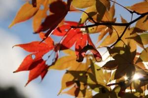 秋(10月11月12月)の定番!東海地方で紅葉狩りが長く楽しめるオススメ人気撮影スポットはここ!