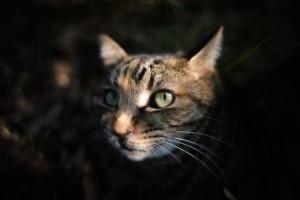 これはキレイ!癒しの美人猫写真集!おすすめの撮影テクニックと機材も!