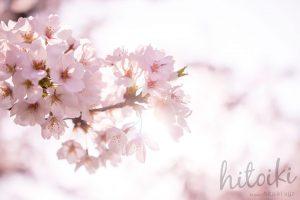 桜で人気の観光名所と美しいサクラの写真をまとめた!撮影スポットも!