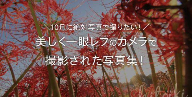10月に絶対写真で撮りたい!美しく一眼レフのカメラで撮影された写真集!行事・イベント・シーンも! 彼岸花 10month_beautiful_photos_taken_in_october_00
