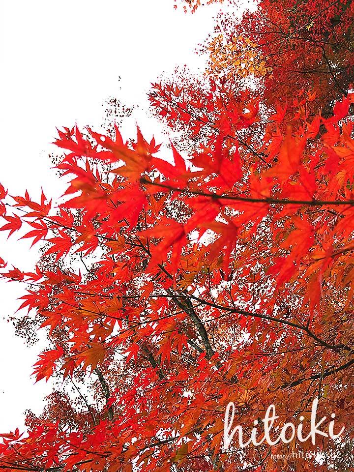 東海地方の穴場紅葉スポット!虎渓山 永保寺(岐阜県多治見市)で、CX-8と人気の写真撮影スポット巡り! eihouji_img_2149