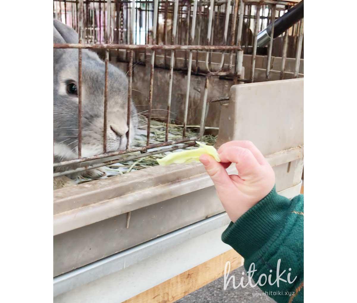 冬の牧歌の里で雪遊び!0歳児から楽しめる人気スポット!評価・評判・レビュー・口コミ・クチコミ・アクセス方法をまとめた!  ウサギ小屋の兎に餌やり体験 うさぎの餌 gifu_hiruganokogen-bokka-no-sato_03